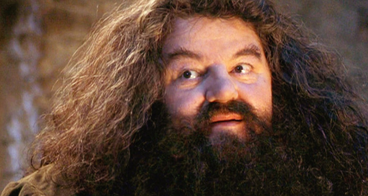 hagrid harry potter and the case of the missing groundskeeper
